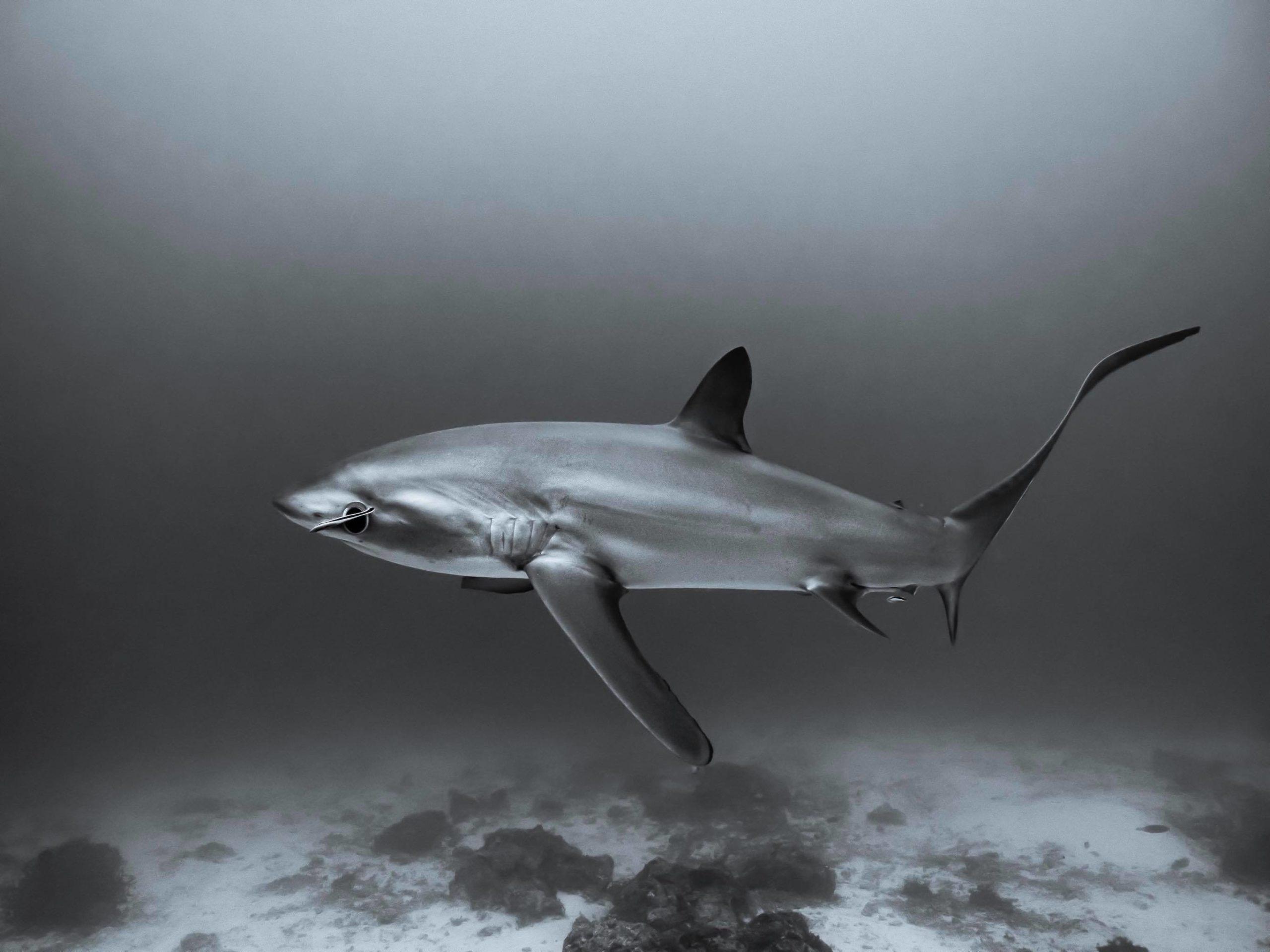Les requins sont ils si dangereux pour l'homme ?