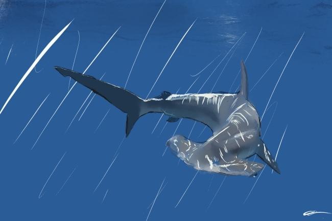 Requin-marteau commun (Sphyrna Zygaena)