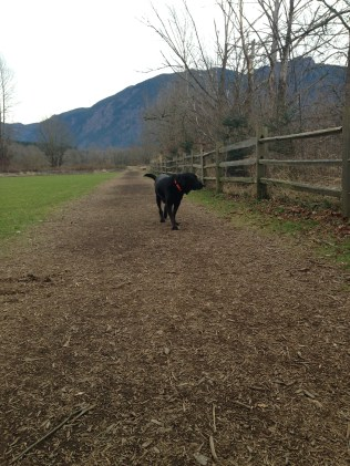 Chester taking a stroll along the path