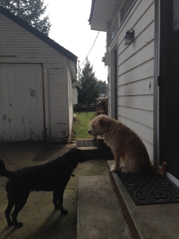 Lilly & Buddy playing king of the step