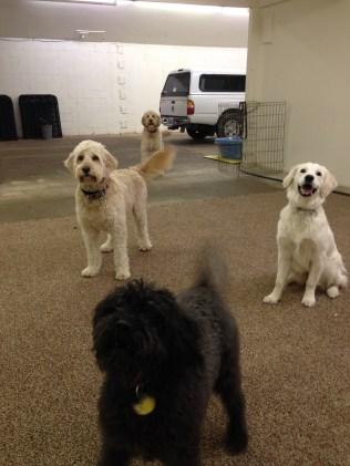 Bella, Maui, Liza & Zoie