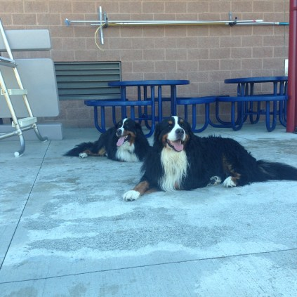 Two very well behaved Pups