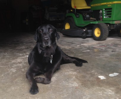 Chester hanging out in the barn