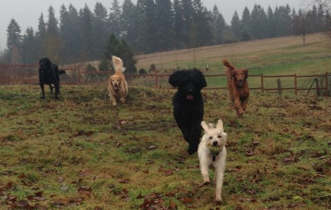 Apollo, Benny, Duke & Mesa