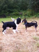 Ike & Baxter