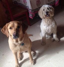 Riley & Sammi
