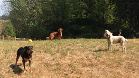 Emmy, Duke & Lilo