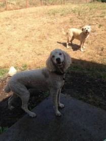 Lilo & Buddy