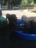 The Boys Harley, Samson, Buddy & Ike