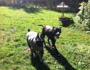 Beau & Samson