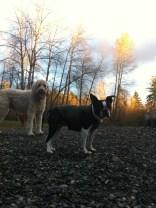 Zoie & Ms Angel