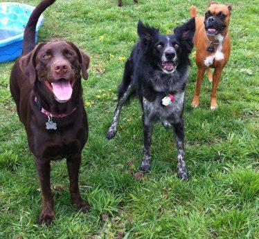 Baylee, Cinder & Ellie