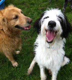 Ziggy & Sunny