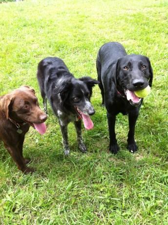 Otis, Cinder & Harley