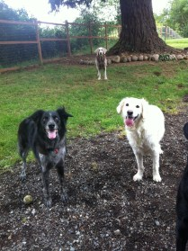 Cinder, Liza & Max