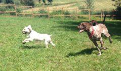Apollo & Ruby