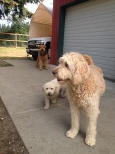 Maui, Teddy & Lexi