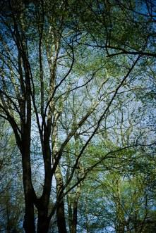 Balade en Forêt (4)