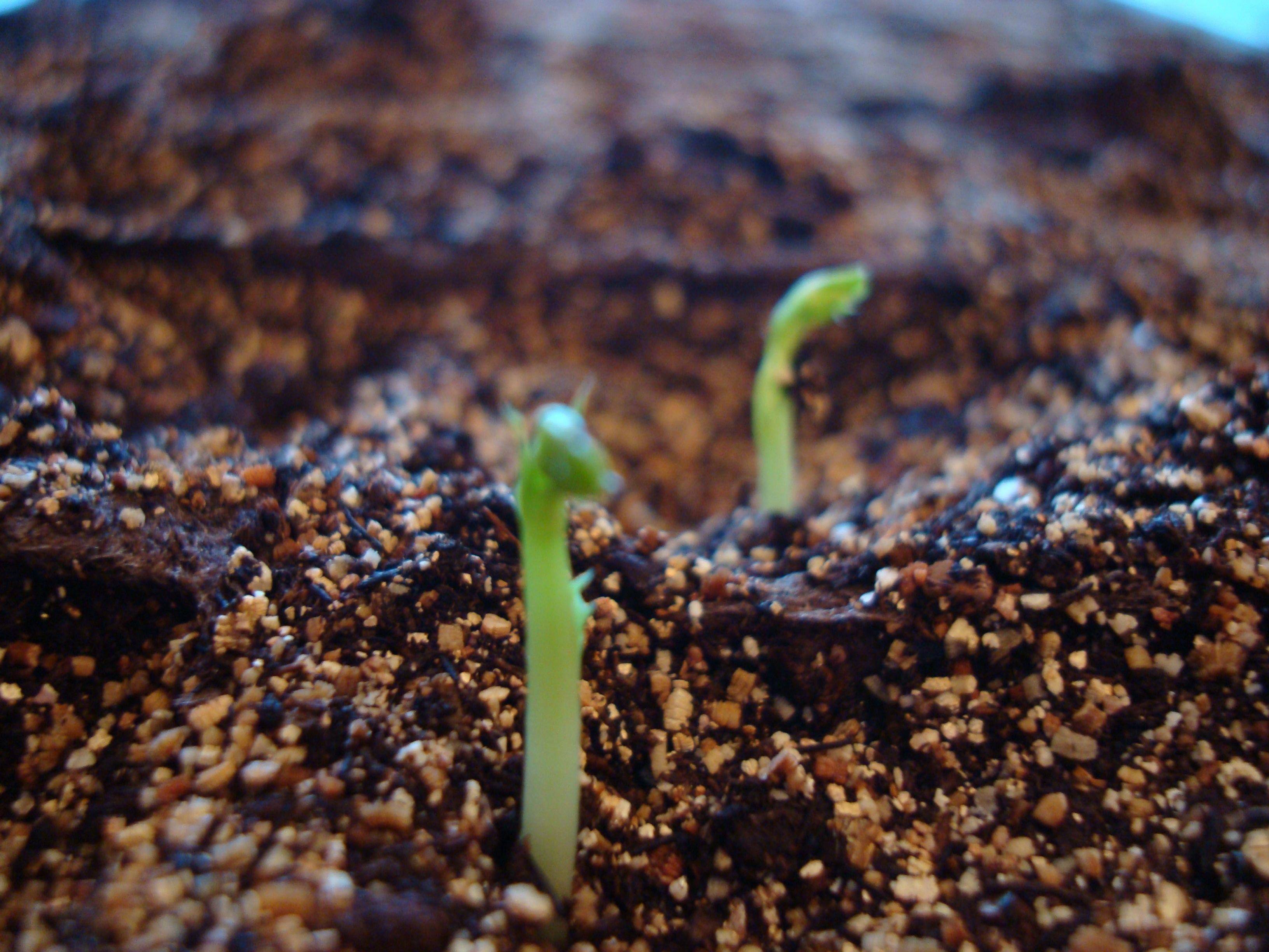 garden_starts2