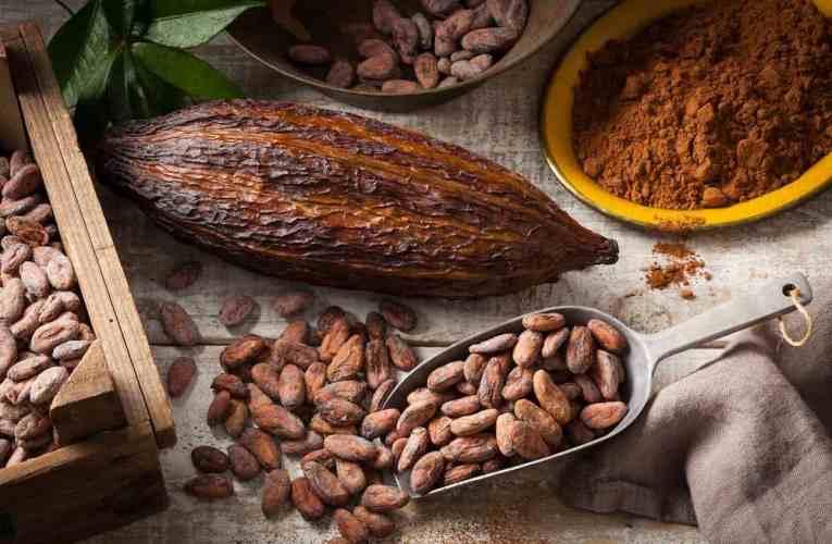 La série « Le maître chocolatier » : l'art de sublimer la fève de cacao