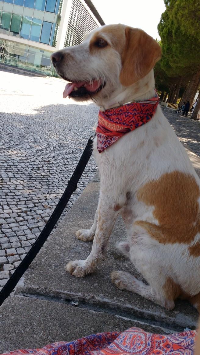 Gerbeaud with bandana