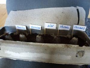 boite à oeufs pour semis
