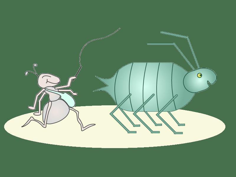 Invasion de puceron