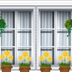 chrysanthèmes en jardinière