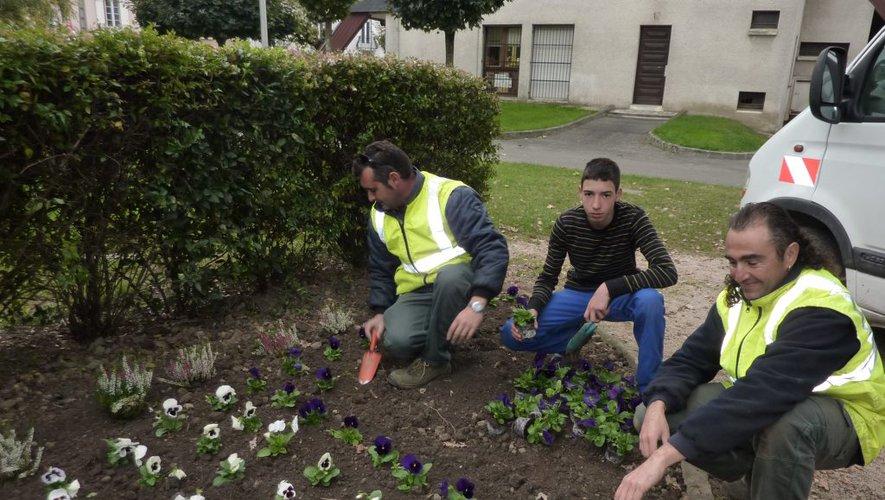 Pensées plantées par des jardiniers municipaux