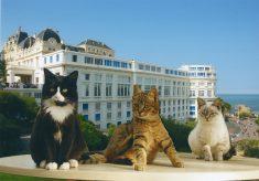 chats-biarritz