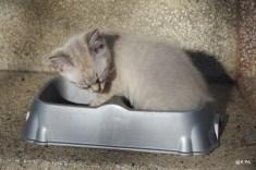 Boulette a trop mangé et dort dans la gamelle