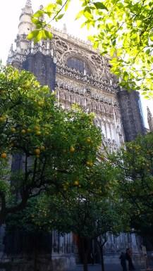orangerie_cathedrale_seville