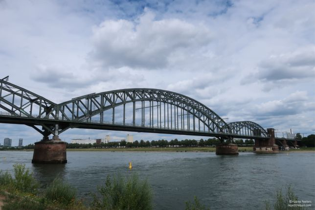 Rhein Köln (Le petit requin)