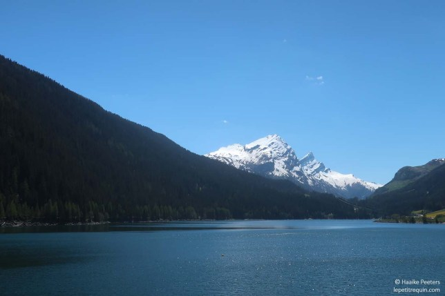 Sufnersee (Le petit requin)