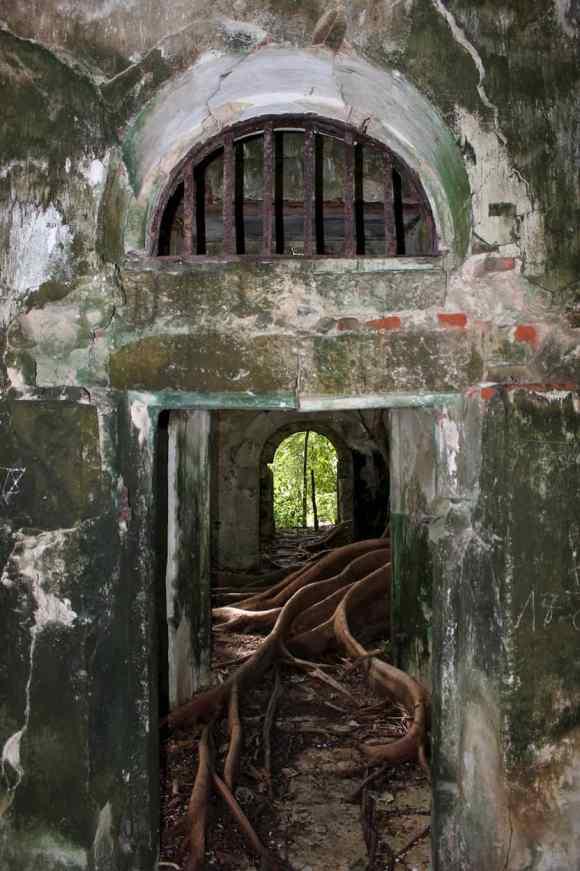 Le figuier maudit à l'intérieur de l'ancienne prison en Guadeloupe