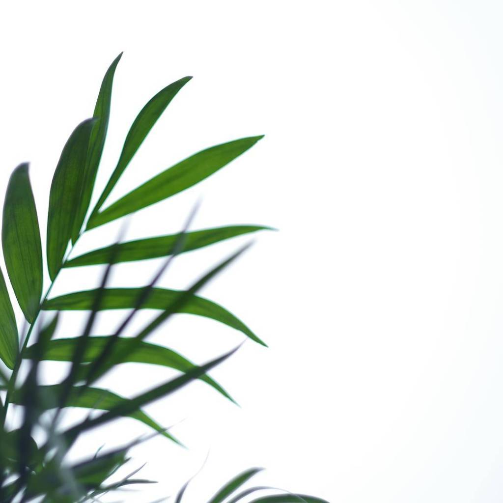 Minimalistycznie minimalism minimalizm simplicity simplelife slowlife bestlife plant somethinggreen