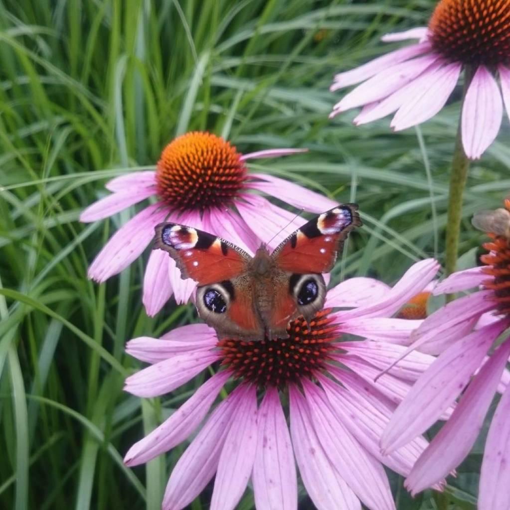 Jestem zaklinaczk motyli  zawsze jak robi im zdjcia tohellip