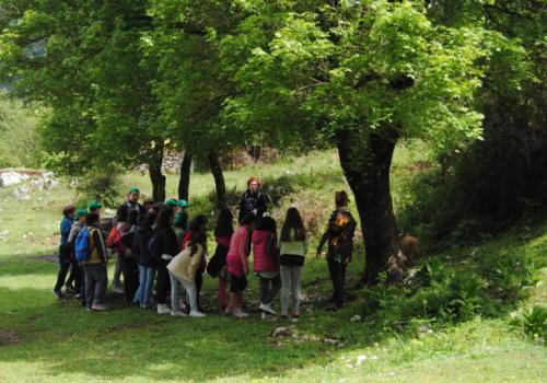 Il primo contatto conoscitivo con gli alberi