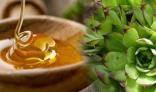 Le mélange de miel avec les feuilles  de joubarbe tue les kystes et les fibromes.