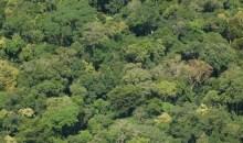 Partage des bénéfices de la forêt classée du Cavally : Les parties prenantes réfléchissent sur la question #Richessesforestières