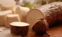 Des astuces pour conserver le manioc #Nutrition