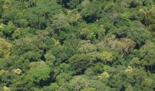 Lutte contre la dégradation des forêts et la perte de la biodiversité en Afrique de l'Ouest : l'USAID initie le programme WA BiCC #Environnement