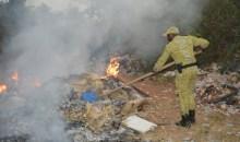 Côte d'Ivoire/Produits contrefaits : la douane brûle plus d'une tonne de pattes de poulets à Guiglo #Fraude