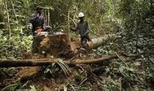 Nouvelle politique forestière : une lueur d'espoir pour la régénérescence du couvert forestier #Environnement