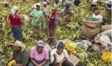 [Côte d'Ivoire/COVID-19] Le marché Gouro d'Adjamé fermé ce jeudi à 18H