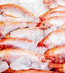 Comment garder le poisson frais plus longtemps ?