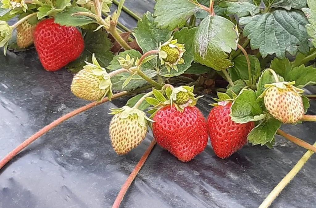 Septembre : Le mois le plus riche en légumes