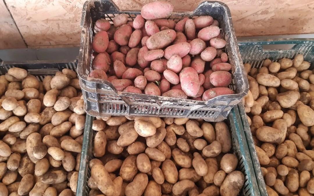 Le 20 juin : pommes de terre nouvelle