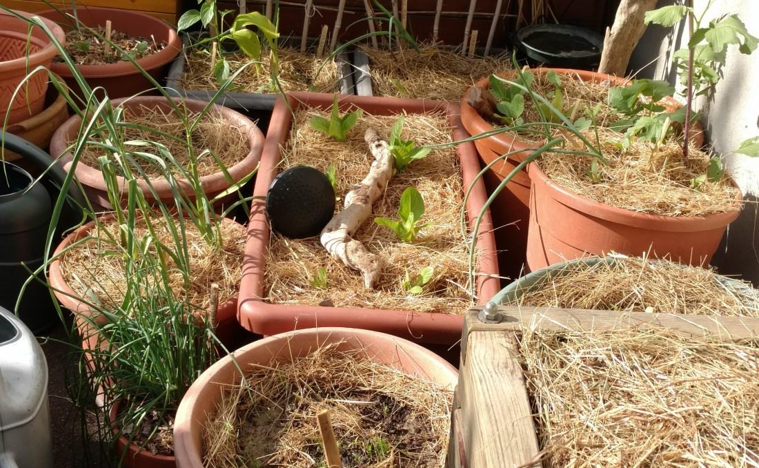 permaculture-culture-lasagne-terrasse-balcon