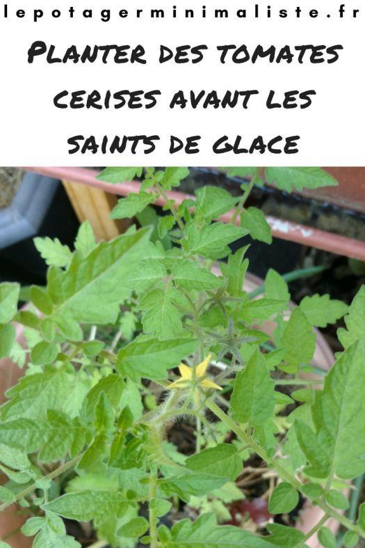 plantation-tomate-cerise-pot-fleur-pinterest